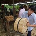 bamboo chopsticks vietnam