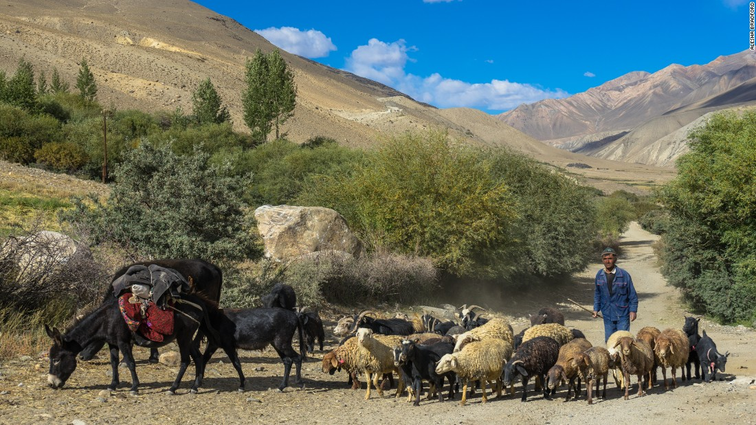 A shepherd moves his herd of sheep through the village of Langar in Tajikistan.