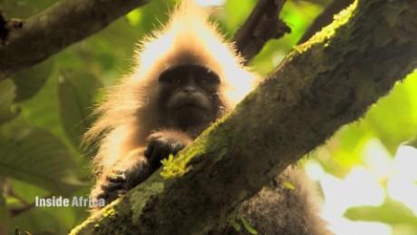 Tracking Tanzania's kipunji monkey