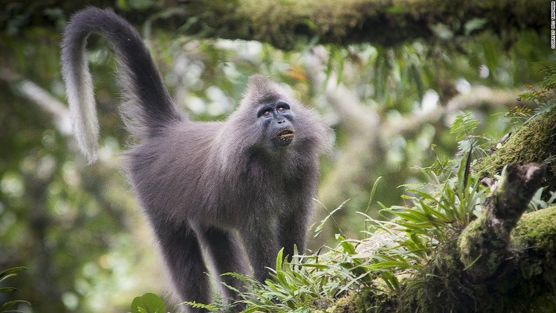 First spotted in 2003 in Tanzania, the Kipunji monkey -- one of Africa's rarest primates -- was once believed to be a myth. Tim Davenport of The Wildlife Conservation Society in Tanzania was the scientist behind the find.