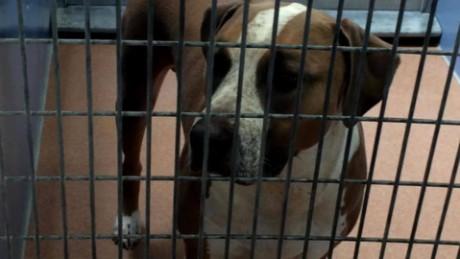 dog kills 3 day old baby pkg_00010306