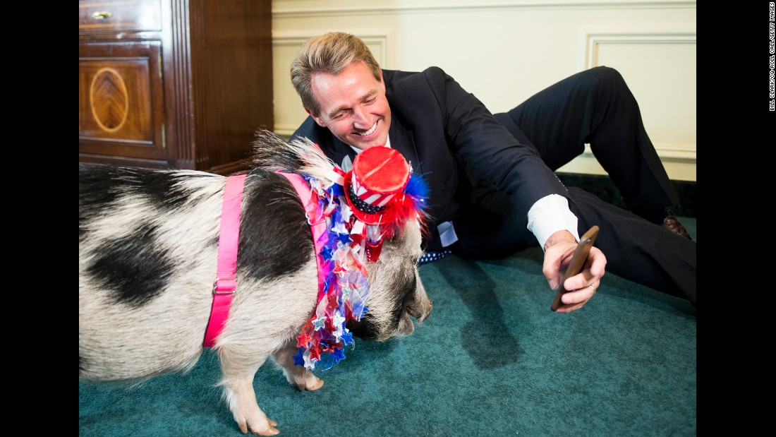 "U.S. Sen. Jeff Flake tries to take a selfie with a pig before a news conference about ""pork-barrel"" spending on Wednesday, April 13."