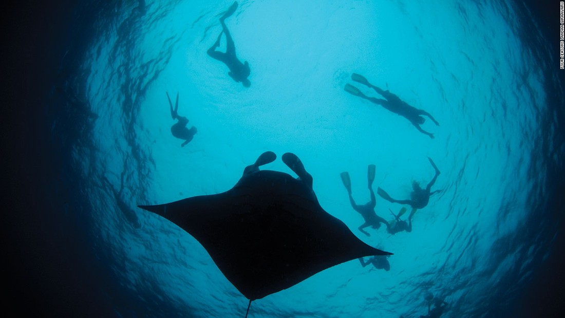 For diving, the top billing in the Maldives is mingling with whale sharks and mantas.