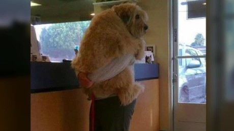 dogs hate hugs moos pkg erin _00012423