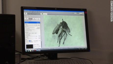 cnnee pkg fernando ramos colombia la cura del zika _00000429