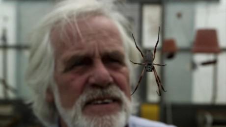 fritz vollrath spider silk jsten orig_00004316
