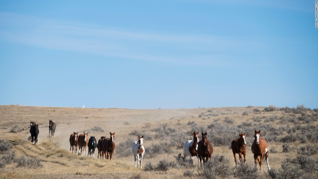Horses are a big part of life on the Crow Reservation in southeastern Montana. The Crow have been riding since they adopted Spanish-introduced mustangs in the 18th century.