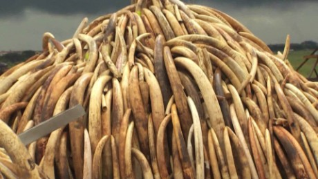 kenya ivory burn nairobi national park orig_00001825.jpg