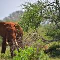 Kenya railway wildlife