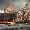 03 kenya ivory burn