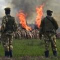 04 kenya ivory burn