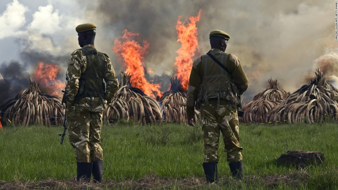 "Kenyan President Uhuru Kenyatta called for an end to ""murderous"" trafficking and to fight against the extinction of elephants in the wild."