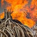 05 kenya ivory burn