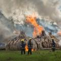 06 kenya ivory burn