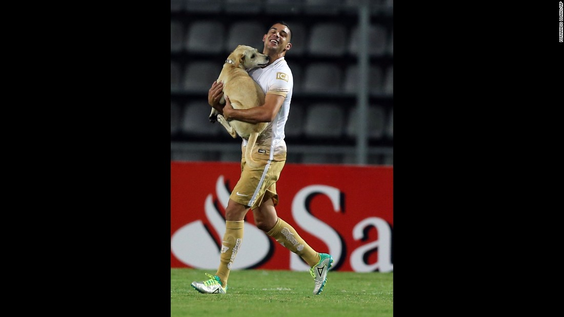Soccer player Gerardo Alcoba carries away a stray dog that ran onto the field Tuesday, April 26, during a Copa Libertadores match in San Cristobal, Venezuela.