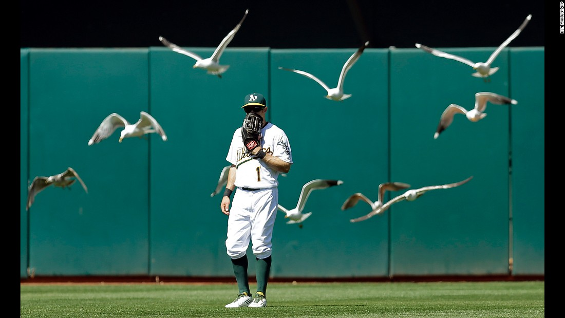 Birds fly near outfielder Billy Burns during a Major League Baseball game in Oakland, California, on Sunday, May 1.