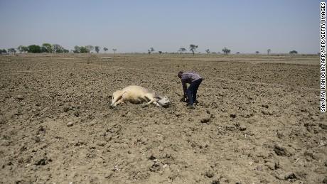 India's drought crisis.