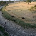 GettyImages-528157572India drought
