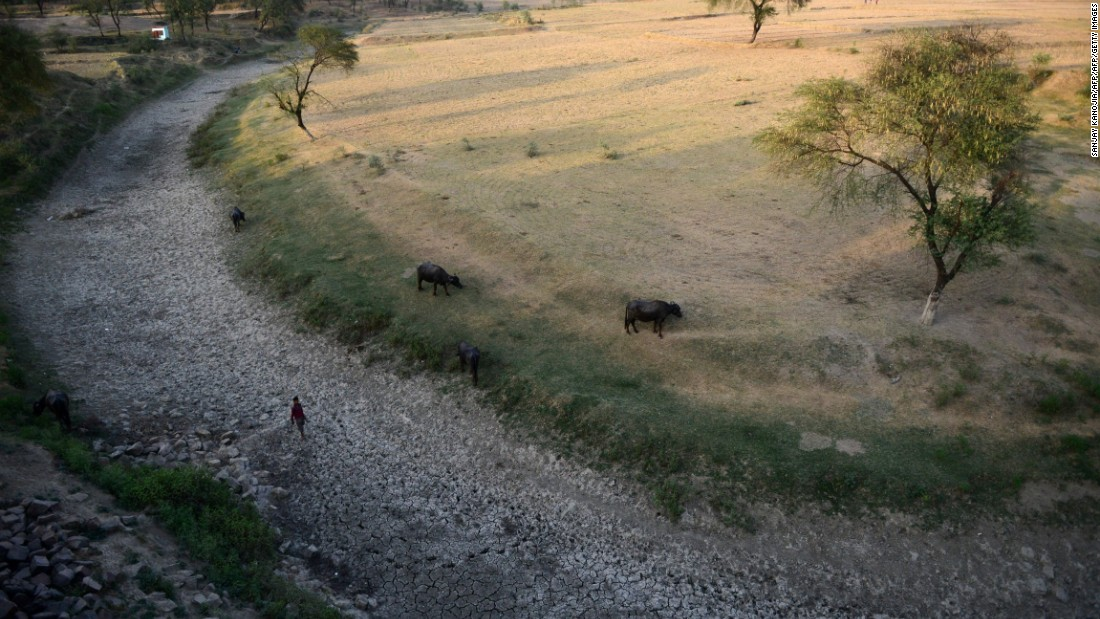 A villager walks with his cattle in the dried-up Mansaita River near Allahabad on Wednesday, May 4.