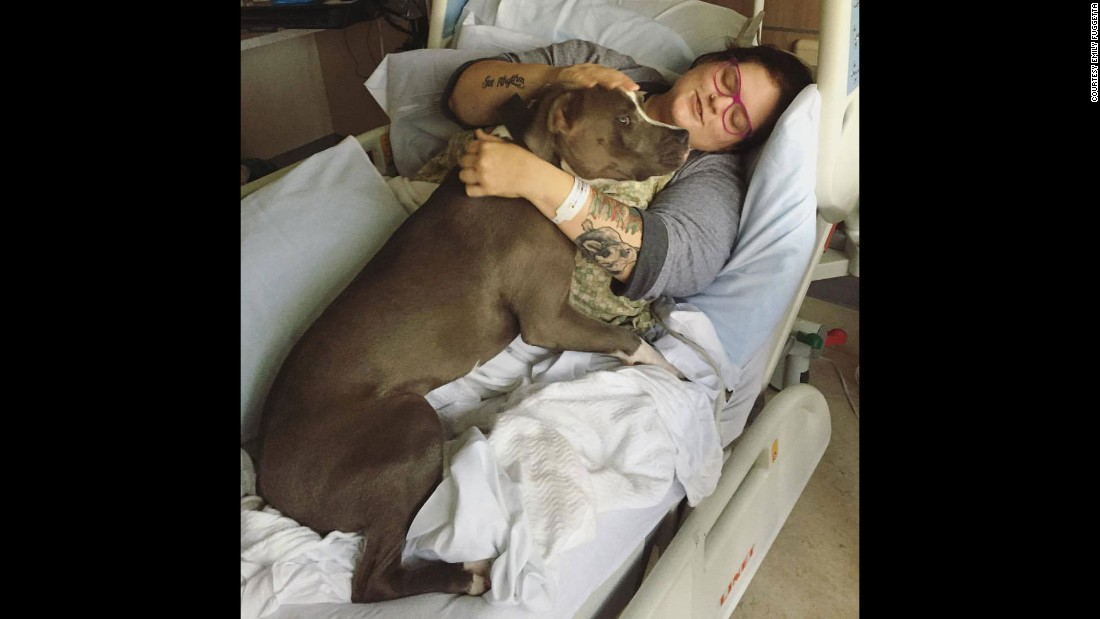 After being in the hospital for two weeks, Fuggetta asked her friends to bring their animals to visit her. Her friends brought in a pit bull to keep Fuggetta's spirits up.