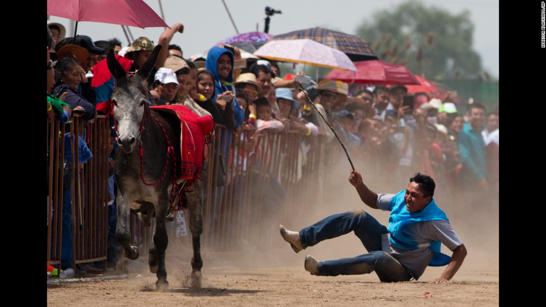 A man falls from his donkey Sunday, May 1, during a race at the annual donkey festival in Otumba, Mexico.