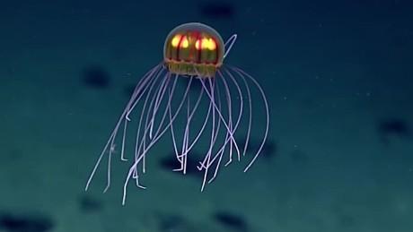 cnnee vo digital descubren nueva medusa con aspecto alienigena _00000801