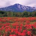 Marsh in Mt. Chokai Yamagata Akita