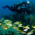 curacao diving RESTRICTED