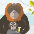 super moms orangutan
