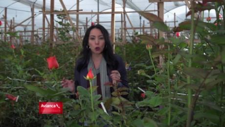 cnnee promo web fuerza en movimiento colombia flores frias mg consultores_00001218