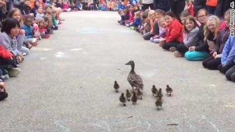 ducklings elementary school guide jnd orig vstan_00001024