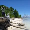 Solomon Islands 4
