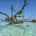 Solomon Islands 5