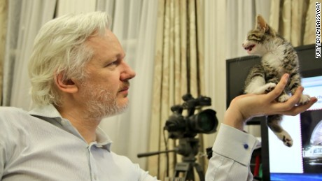 Assange's new feline companion.