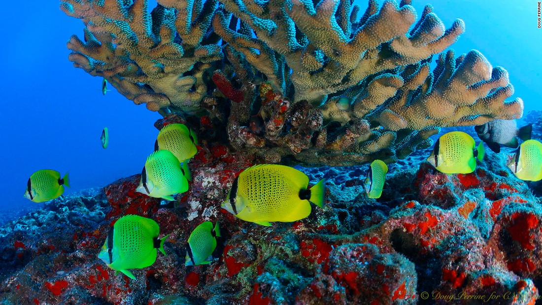 """There's a gamut of rare fish,"" Captain Ryan Ferry of Seasport Divers says. ""Some species are only really seen in the Northwestern Hawaiian Islands and occasionally around Kauai."""