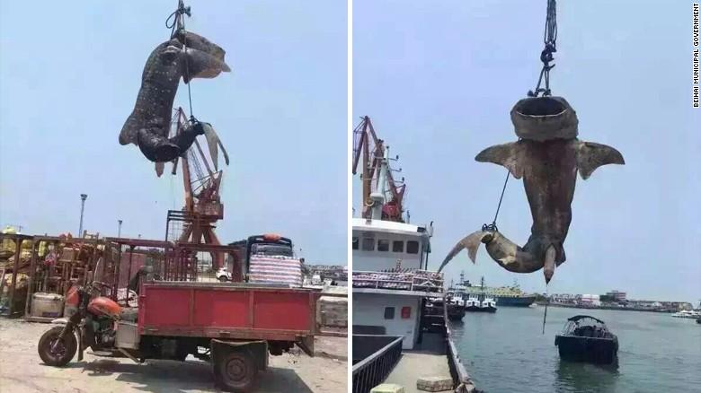 Shark's death sparks outrage online