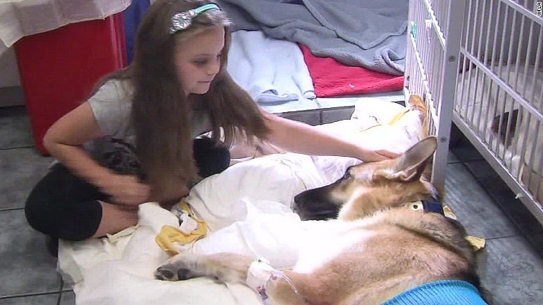 dog saves girl snake bite pkg_00005223