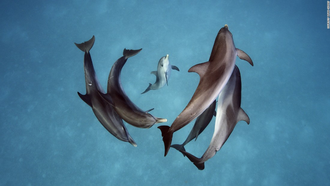 We asked some of the world's top underwater photogs for shooting tips. They shared them in the story below, along with some of their best work in this gallery. Brian Skerry shot these spotted dolphins (Stenella frontalis) in the Bahamas.