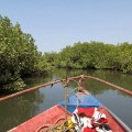 senegal mangroves sine saloum