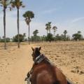 senegal marlodj horse