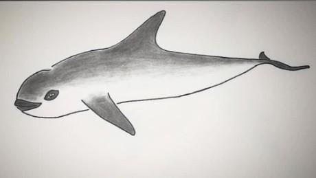 vaquita porpoise extinction pkg kinkade _00002220