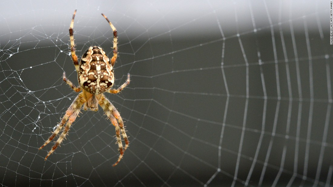 Spider silk is being harnessed or a range of medical and technological applications. The material is pound-for-pound stronger than steel.