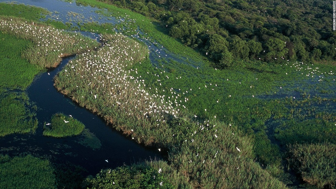 Nylsvley Nature Reserve is one of the most important and populous bird habitats in southern Africa.
