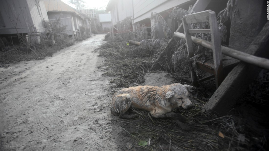 A dog covered in volcanic ash crouches down Sunday, May 22.