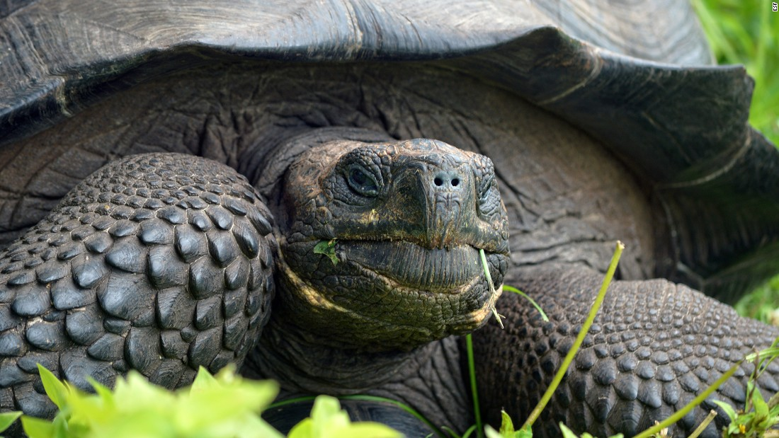 "The International Institute for Species Exploration named its top 10 new species on Monday, May 23. The scientists said this newly discovered tortoise ""could serve as a poster species for conservation and evolution."" There are only about 250 of these guys left, so the discovery has immediate conservation implications."