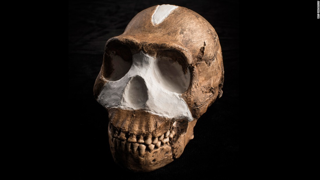 Homo naledi, discovered in South Africa, shares some features with modern humans (similar size and weight) and some features with earlier ancestors.