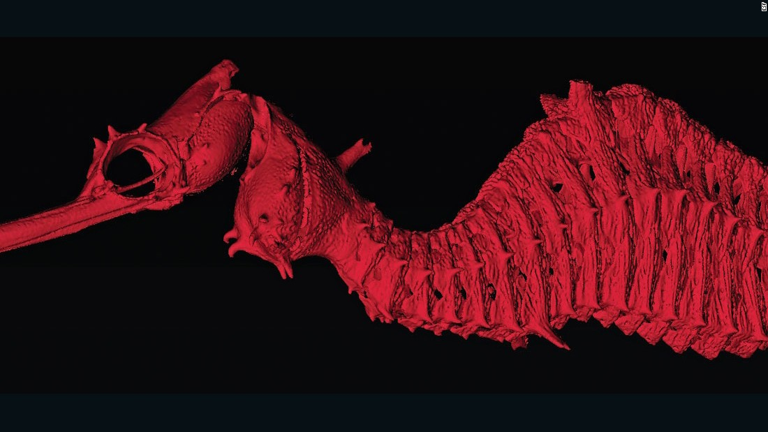 Check out this beauty. It's ruby red with pink vertical bars. And its discovery off the coast of Western Australia is a big deal because this is only the third known species of seadragons.