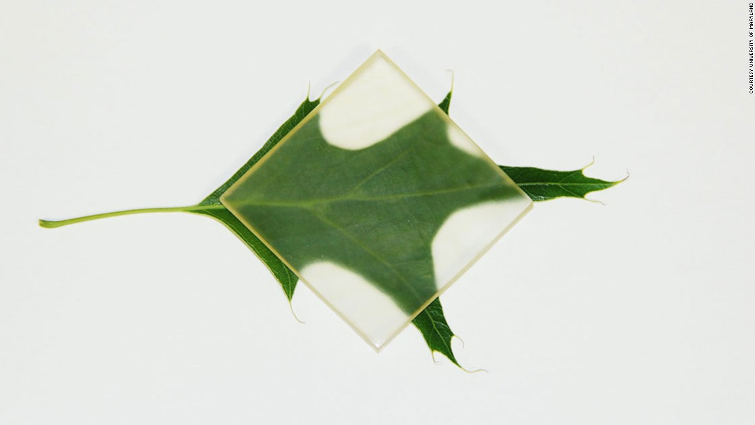 In August last year, scientists at the University of Maryland created transparent wood.