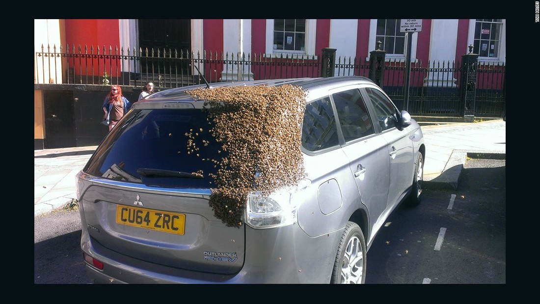 Bees Chase Car For  Days