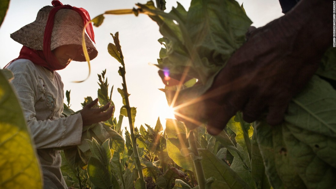 According to the International Labor Organization, more than 1.5 million children aged 10 to 17 work in agriculture in Indonesia.